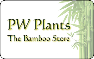 The Bamboo Store