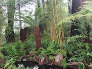 Tree Fern Display