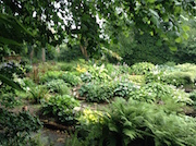 National Hosta Collection